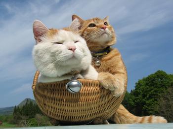 上一篇文章:梦见在河里抓鱼-梦见好多猫
