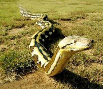 周公解梦 梦见蟒蛇怎么解
