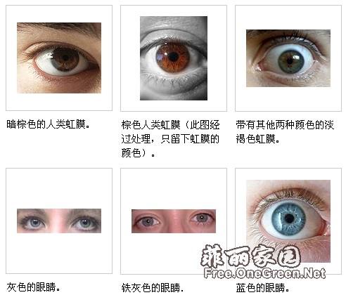 眼睛的组织结构图